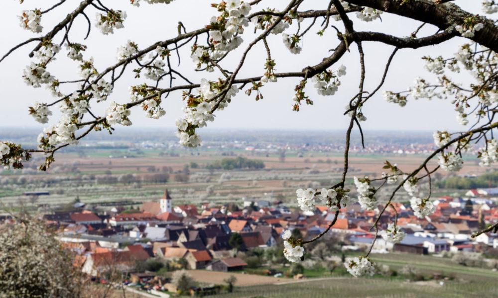 Touristikverein Königschaffhausen